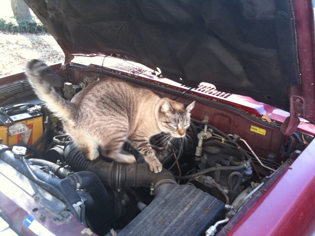picture: cat on SUV air intake